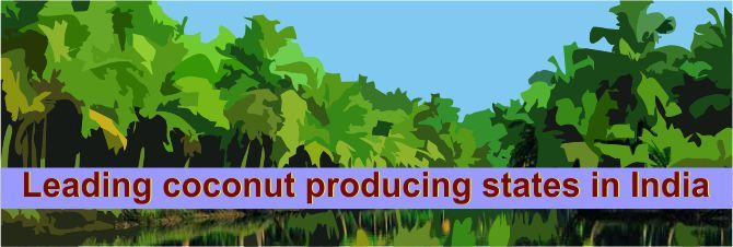 Leading coconut producing states in India